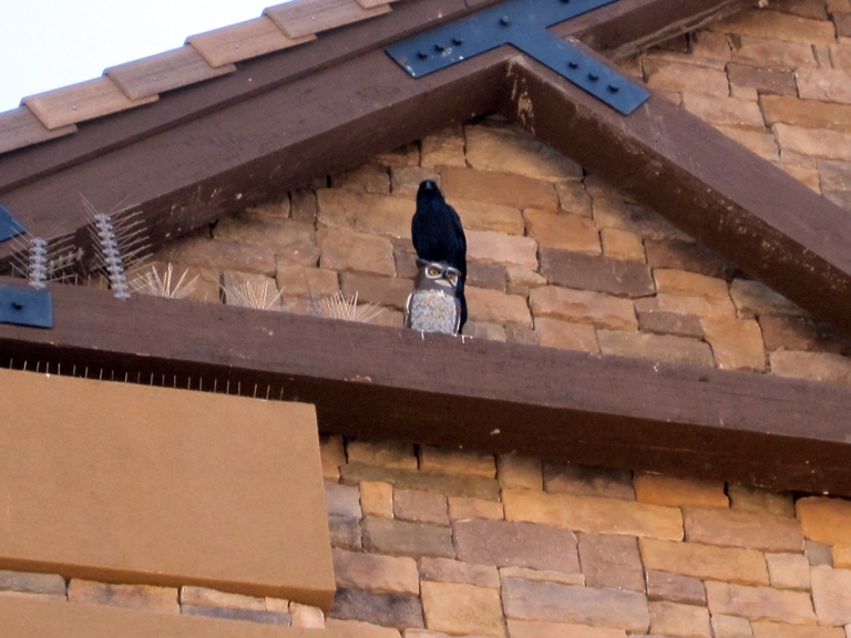 Improper Bird Deterrent Installation or Application