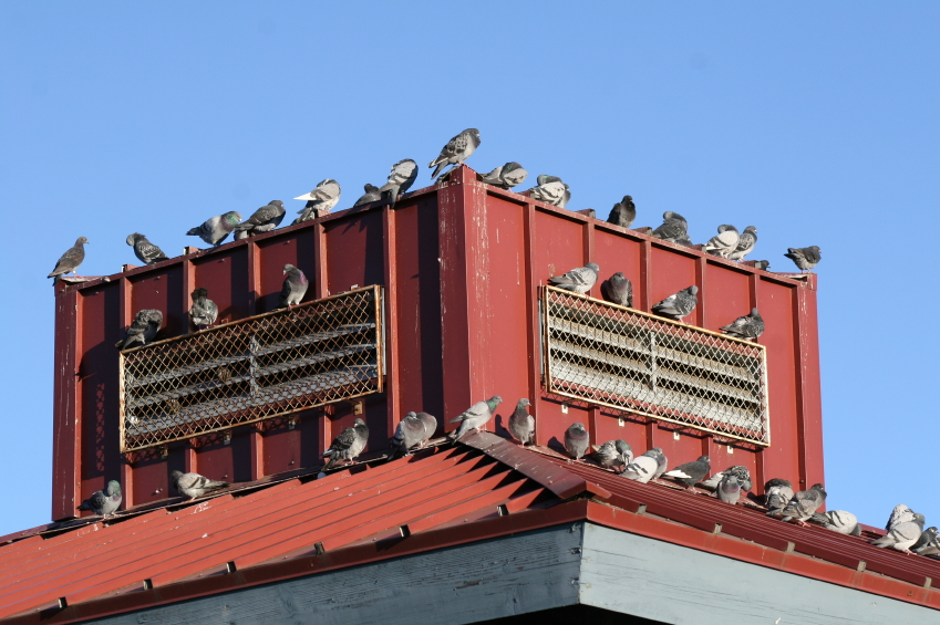 So Your Building Has Birds - A step by step guide to bird exclusion for commercial buildings.