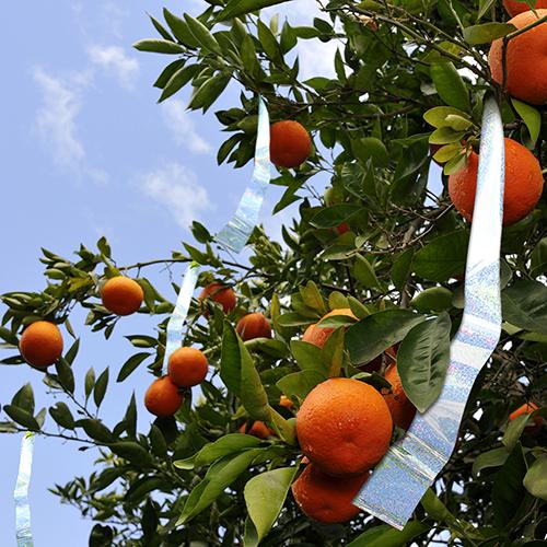2-inch-Flash-Tape-MMAFT-SIL-fruit-tree