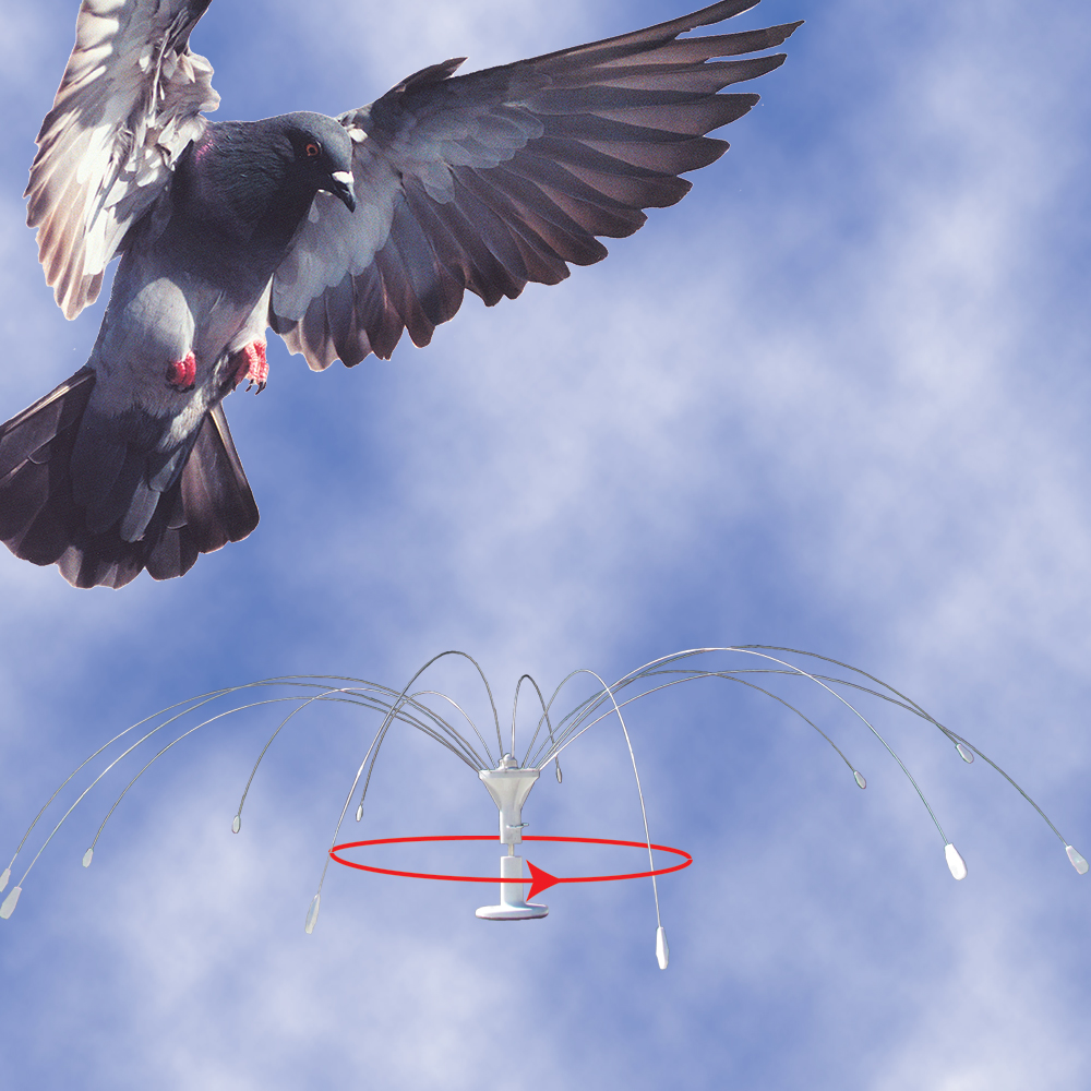 Bird Spider 360