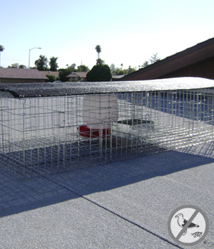 Pigeon Trap with shade food and water pans 46 inch x 24 inch x 10 inch