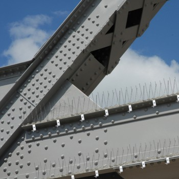 girder bird spikes