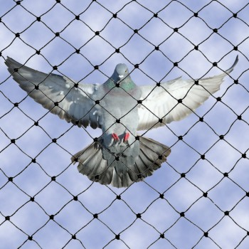 Bird Netting 3/4 inch mesh