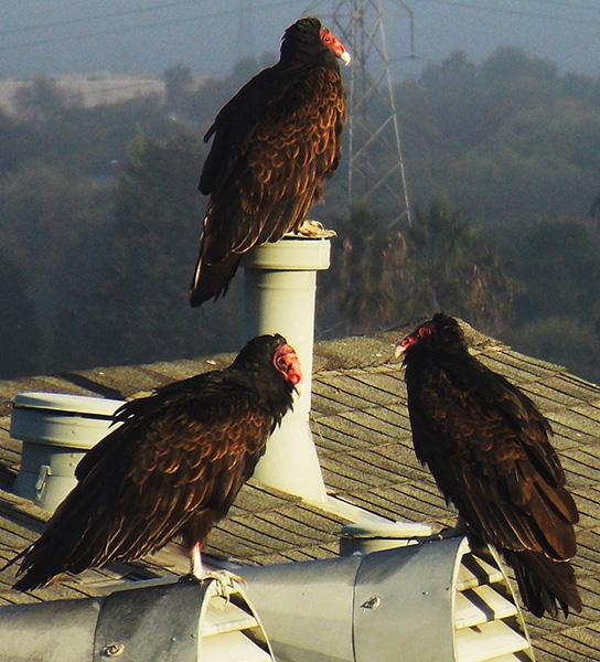 Indiana bird control