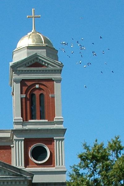 Alabama bird control