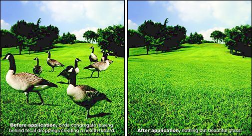 avian control goose repellent