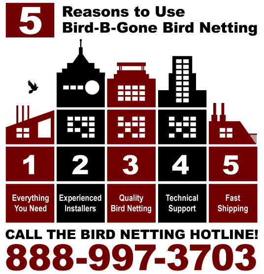 bird netting hotline