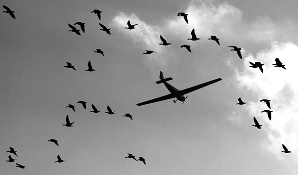 Connecticut bird control
