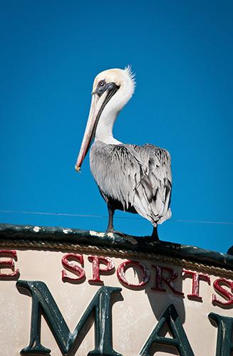 Florida bird control
