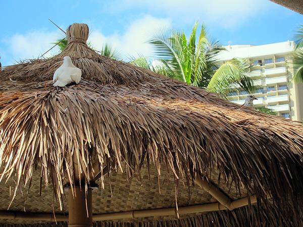 Hawaii bird control