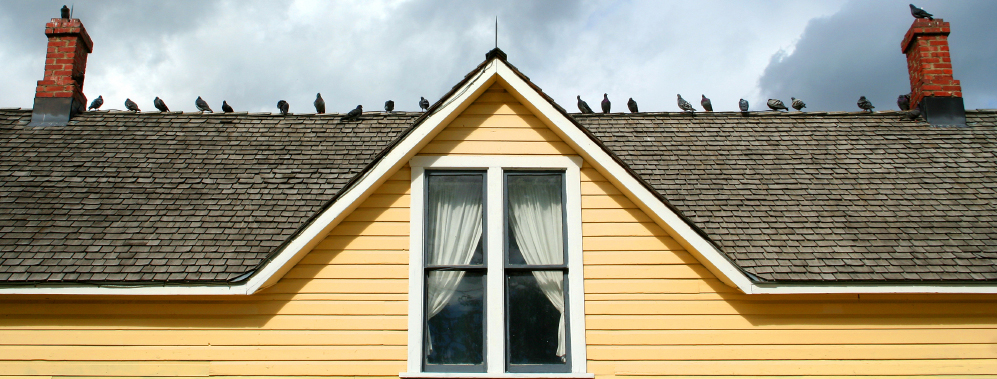 how to keep birds away from windows