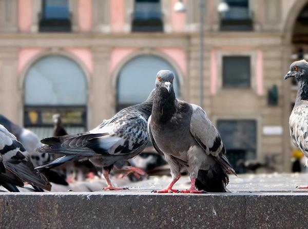 louisiana bird control
