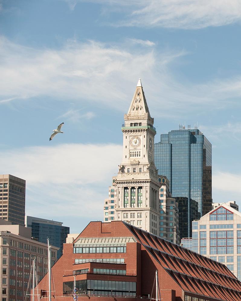 Massachusetts bird control
