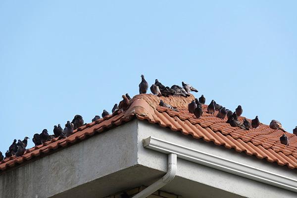 Nevada bird control