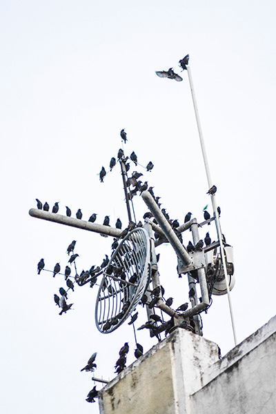 North Carolina bird control
