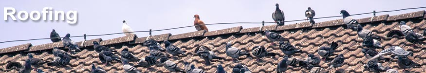 bird control for roofers