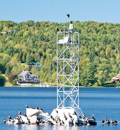 Vermont bird control