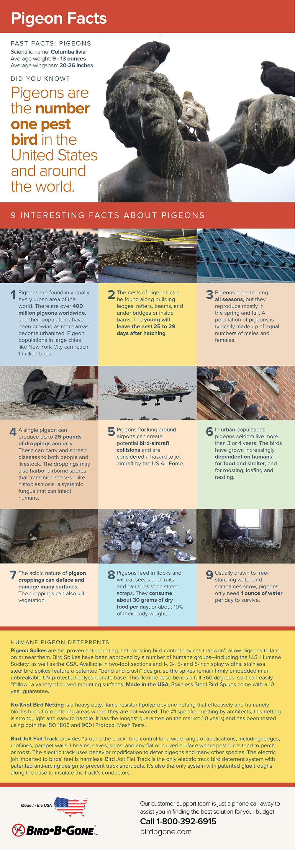 an infographic with 9 facts about pigeons